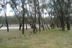 Scotts Beach Free Camping Area Cobram