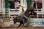 Warwick Rodeo – October each year