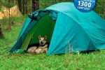 Bush Camping with Dogs
